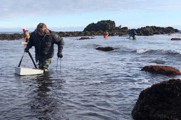 Les amateurs de la pêche aux oursins se régalent
