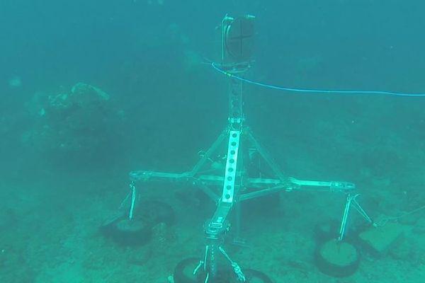 RISQUE requin : un sonar pour éviter les attaques