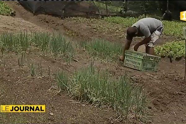 Les agriculteurs victimes collatérales des intempéries
