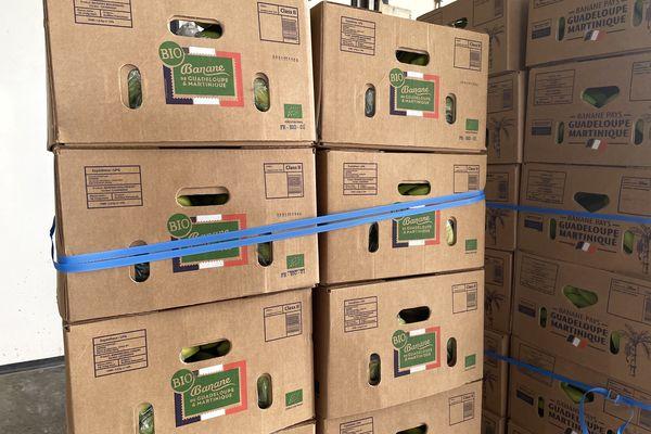 Cartons de banane bio