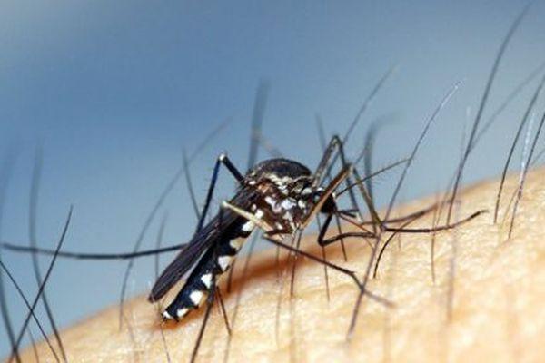 Des programmes européens pour mieux connaître Zika