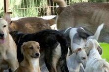 Selon une étude, 73 000 chiens se retrouvent sur la voie publique à La Réunion. Un appel à projets a été lancé afin de financer des actions pour limiter une situation alarmante.