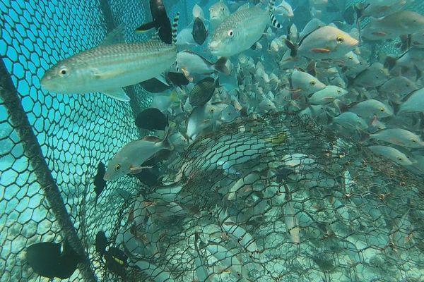 parc à poisson Rangiroa