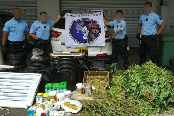 Lutte contre les cultures illicites de Pakalolo