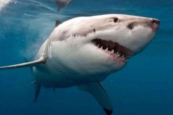 Les filets anti requins seraient inefficaces