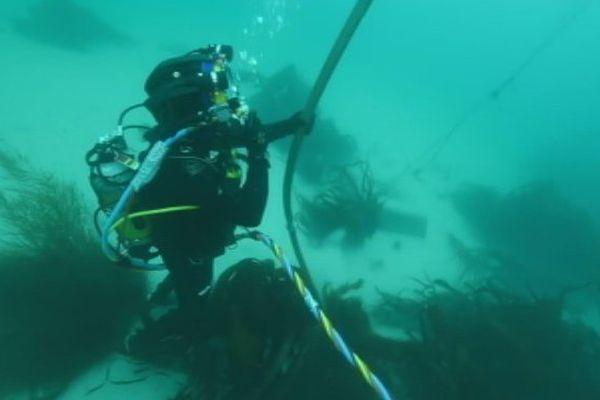 Nouveau projet de câble sous-marin dans les eaux Polynésiennes