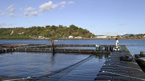 aquaculture Mayotte