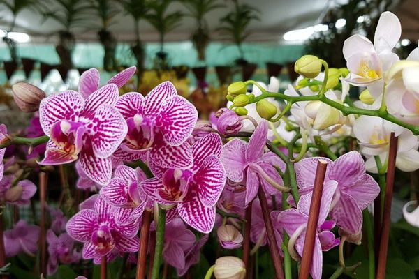 Florilèges 2019 - Orchidées