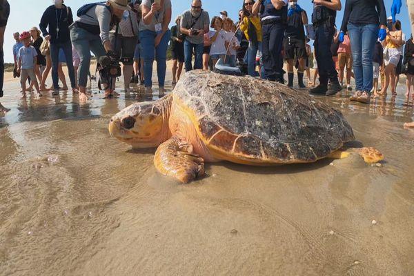France, 8 tortues soignées remises à la mer