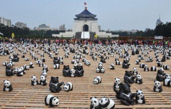 1600 pandas wwf 02