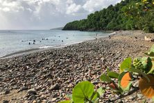 1- La plage Caraïbe à Pointe-Noire (Guadeloupe)