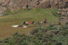 Des archéologues français et canadiens sur le site de l'Anse à Henry sont à la recherche de vestiges de l'occupation européenne