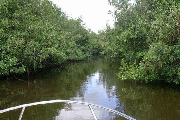 Visite de ma mangrove