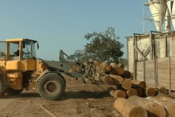 La biomasse en Guyane