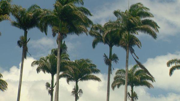 Moindou palmiers