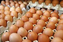 Les oeufs font partie des quelques produits dont les prix ont baissé au mois de juillet.