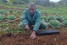 Alexandre Terne agriculteur bio à Morne Degras au Lorrain.
