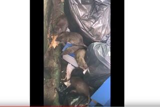 Des rats sur le marché de Basse-Terre