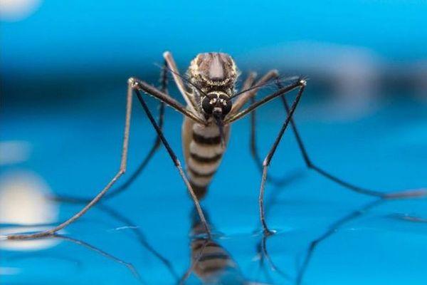 Dengue: 88 cas enregistrés en une semaine, 20 communes concernées à La Réunion