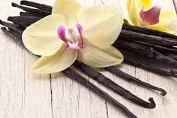 La vanille noire de Mayotte