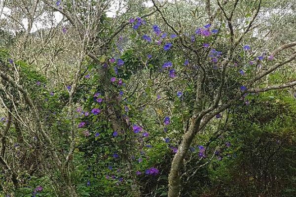 Fleurs en forêt de Bébourg