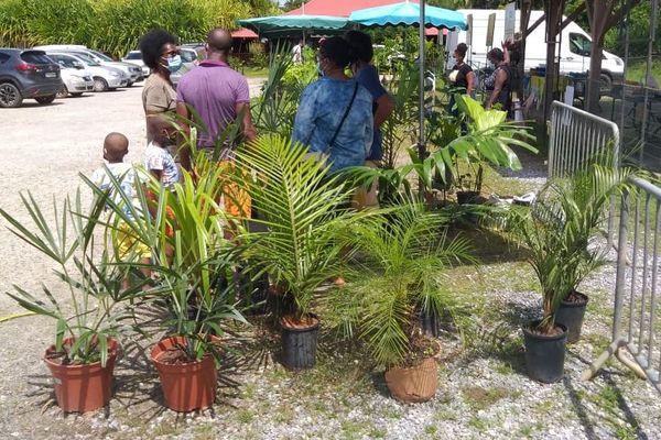 Montsinéry-Tonnégrande: un nouveau marché aux plantes prend racine au Zoo