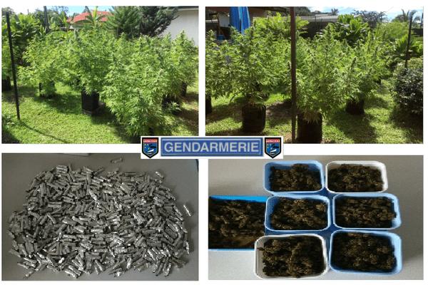 Canabis gendarmerie