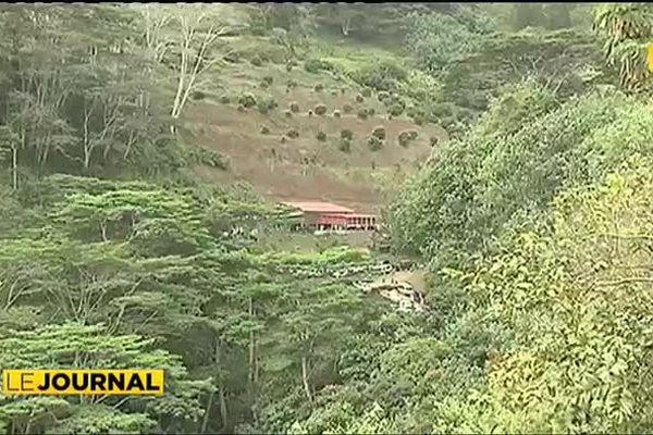 Combats de coqs : le désarroi des riverains du lotissement Sage