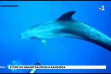 Les dauphins de Rangiroa comme sujet d'étude
