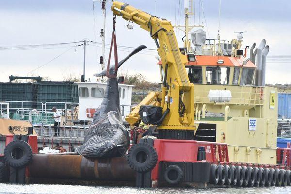 Baleine morte remorquée