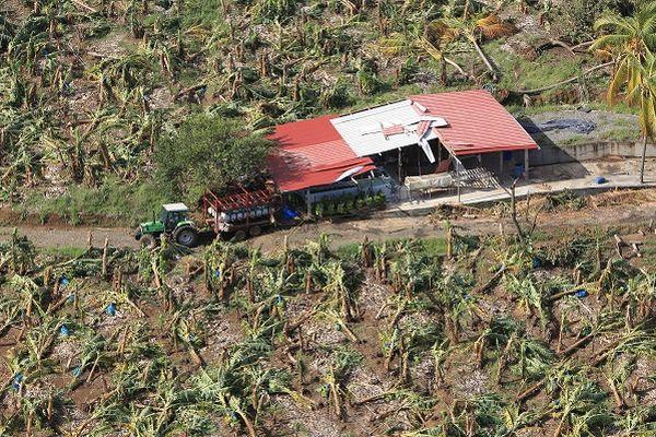 Plantation de bananiers détruite après le passage du cyclone Dean en 2007