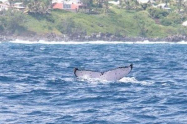 1ere Baleine