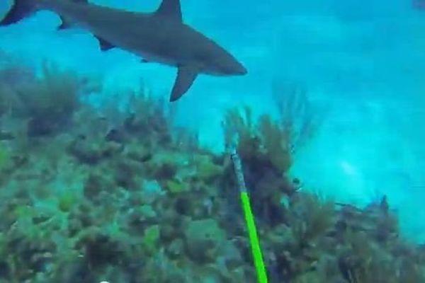 go pro requin