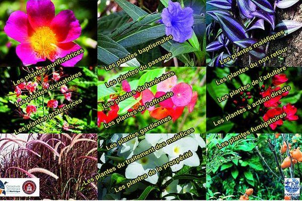 Expo plantes magiques