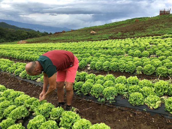 producteur de salades les makes 2
