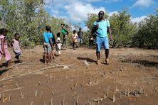 A Poroani, une partie de la mangrove est dégradée. Mais les associations environnementales ne perdent pas espoir et travaillent pour la protéger.