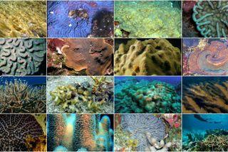 Les 16 espèces de coraux protégées par un arrêté ministériel