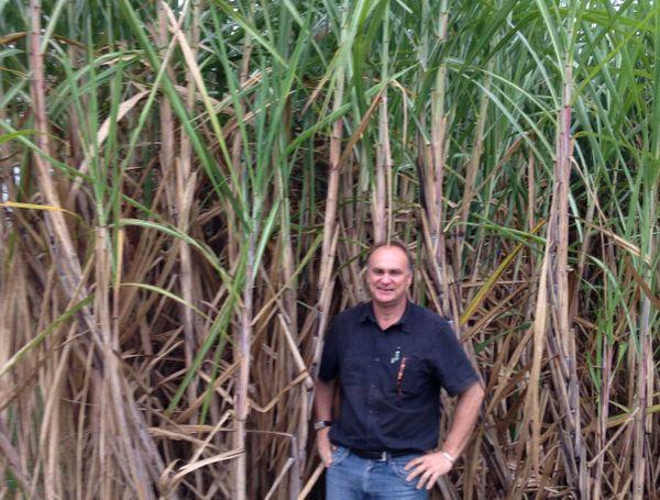François-Régis Goebel dans un champ de canne à sucre