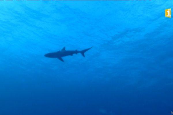 20160514 Requin