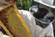 Apiculteur professionnel, Esaïe Guillaume exploite 110 ruches.