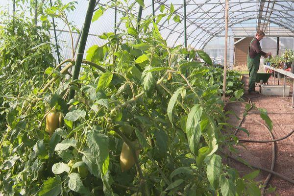 Arbo'ral diversifie son activité en proposant des fruits et des légumes issus de sa production locale