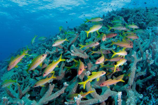 Une étude internationale montre comment concilier biodiversité des récifs coralliens, et pêche artisanale