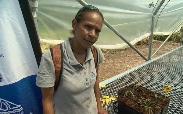 Marguerite Combo Ppic pépinière île Ouen (3 avril 2017)