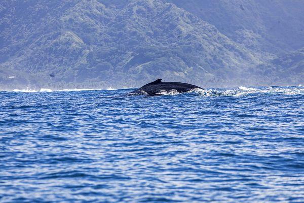 Baleine Vairao 5