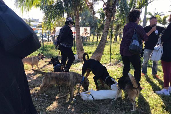 Adoption de chiens au parc Brunelet