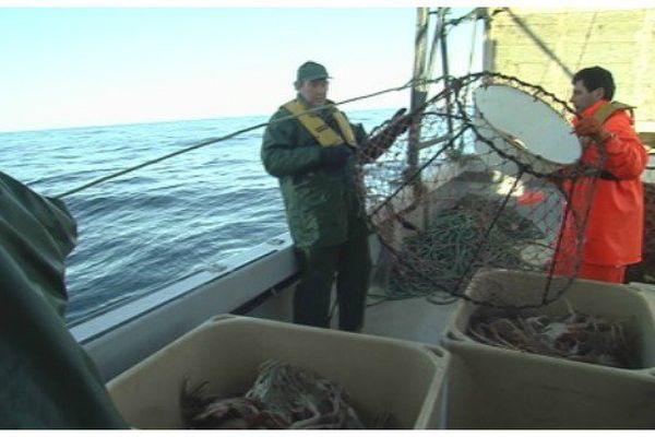 Crabe des neiges : l'inquiétude des pêcheurs et des scientifiques