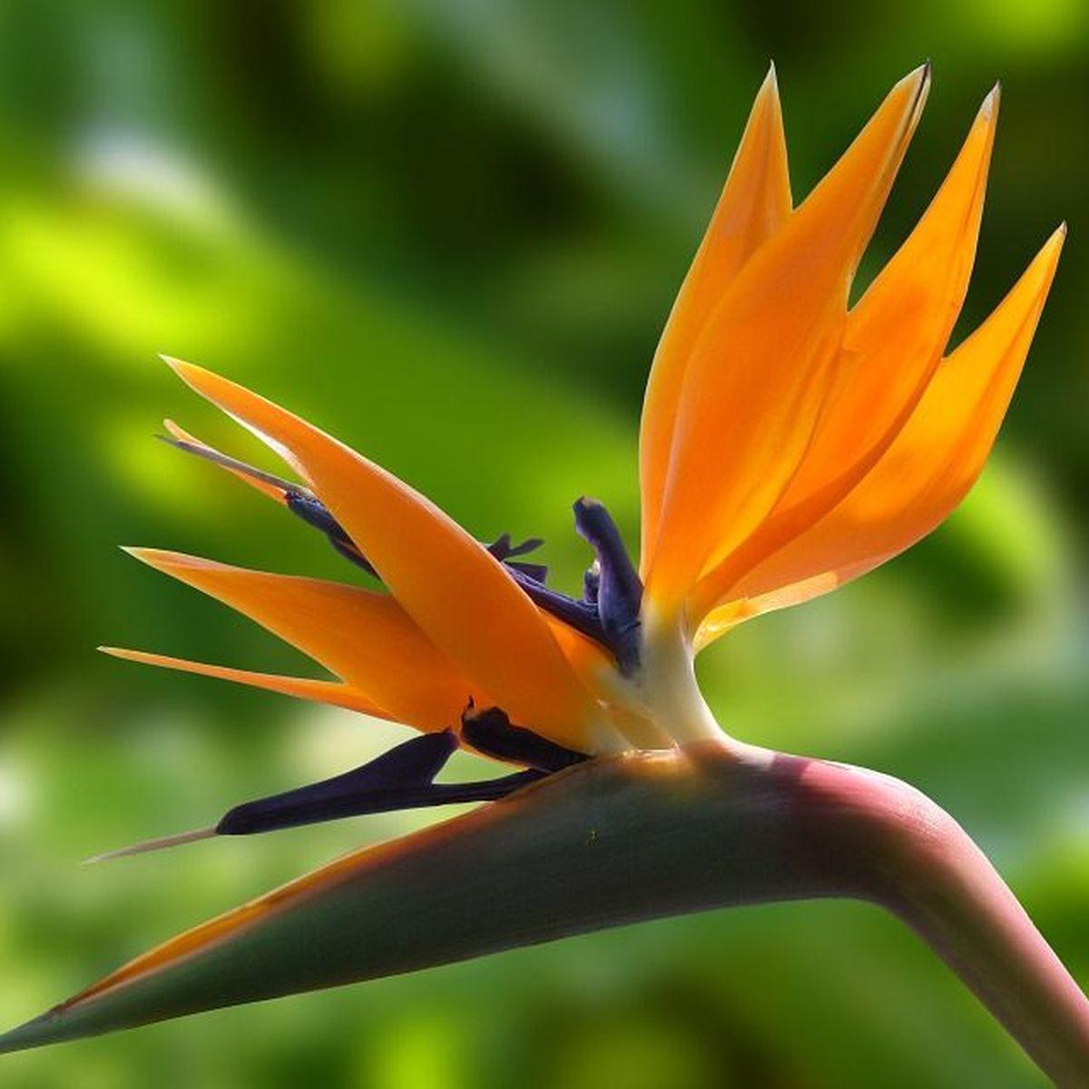 La ville des Trois-Ilets accueille les 4es Floralies Internationales de Martinique