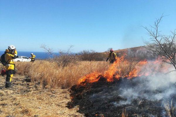 Opération brûlage dans la savane Cap Lahoussay