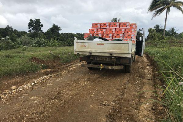 transport banane Sarcelle