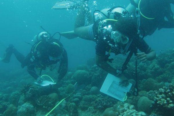 COI et protection corail